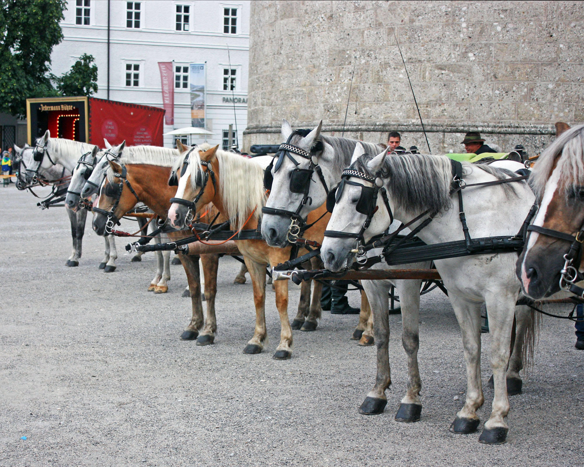 Horses waiting patiently in Residence Square.